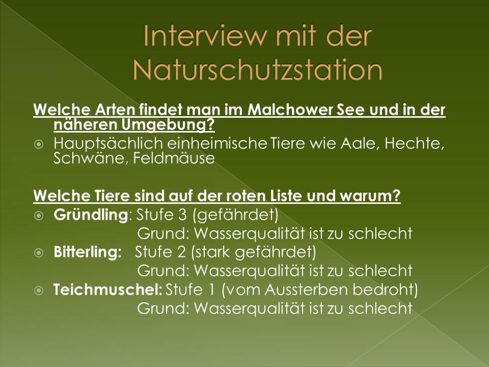 Welche Arten findet man im Malchower See und in der näheren Umgebung?  Hauptsächlich einheimische Tiere wie Aale, Hechte, Schwäne, Feldmäuse Welche T