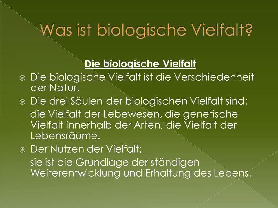 Die biologische Vielfalt  Die biologische Vielfalt ist die Verschiedenheit der Natur.  Die drei Säulen der biologischen Vielfalt sind: die Vielfalt