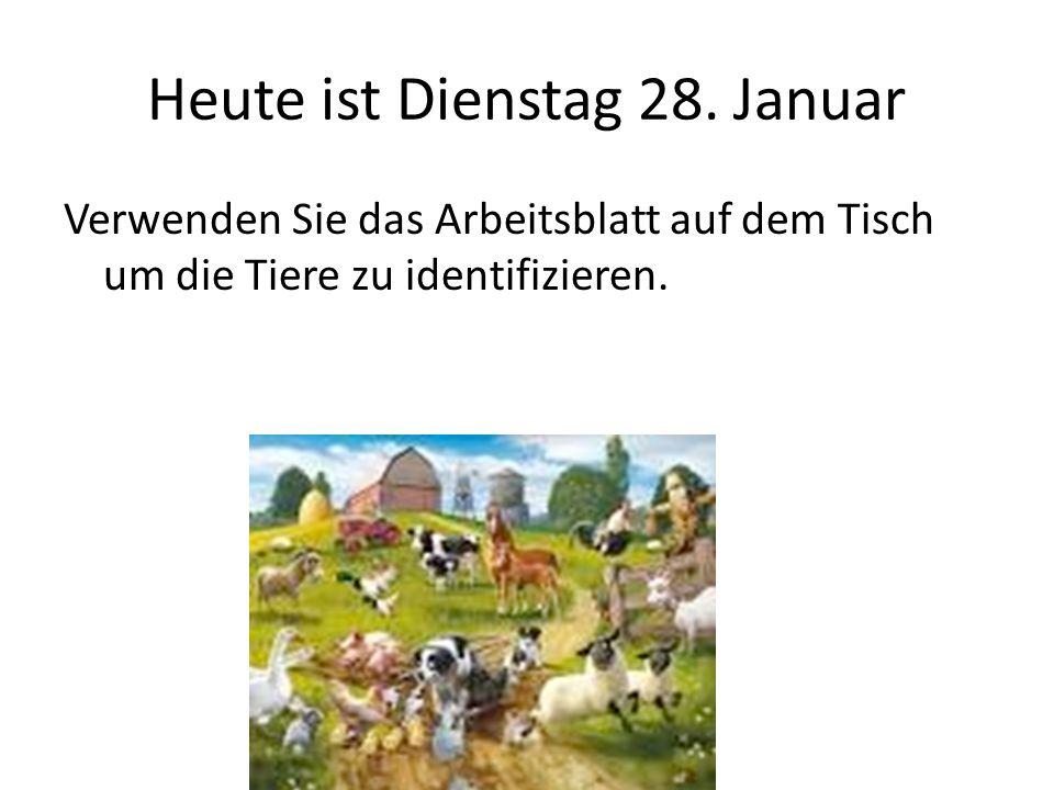 Heute ist Dienstag 28. Januar Verwenden Sie das Arbeitsblatt auf dem Tisch um die Tiere zu identifizieren.