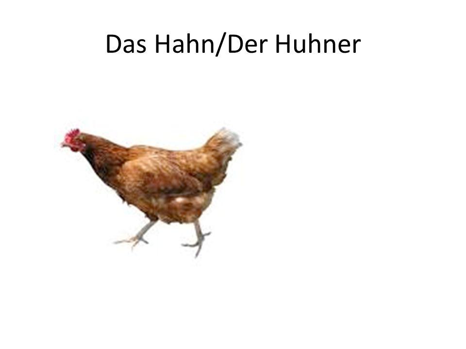 Das Hahn/Der Huhner