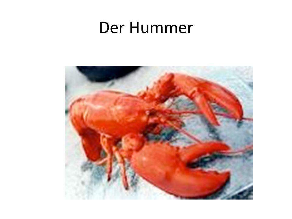 Der Hummer