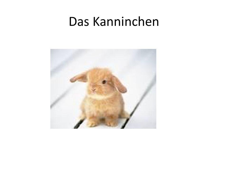 Das Kanninchen