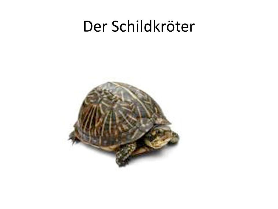 Der Schildkröter