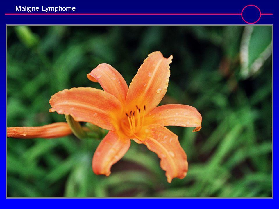 Maligne Lymphome