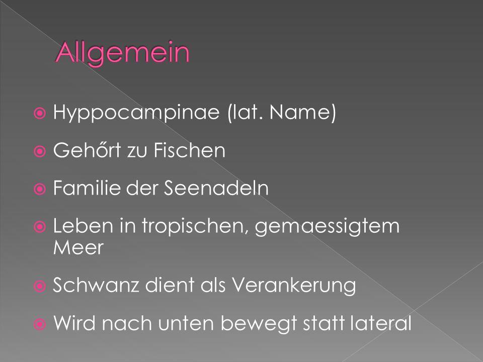  Hyppocampinae (lat.