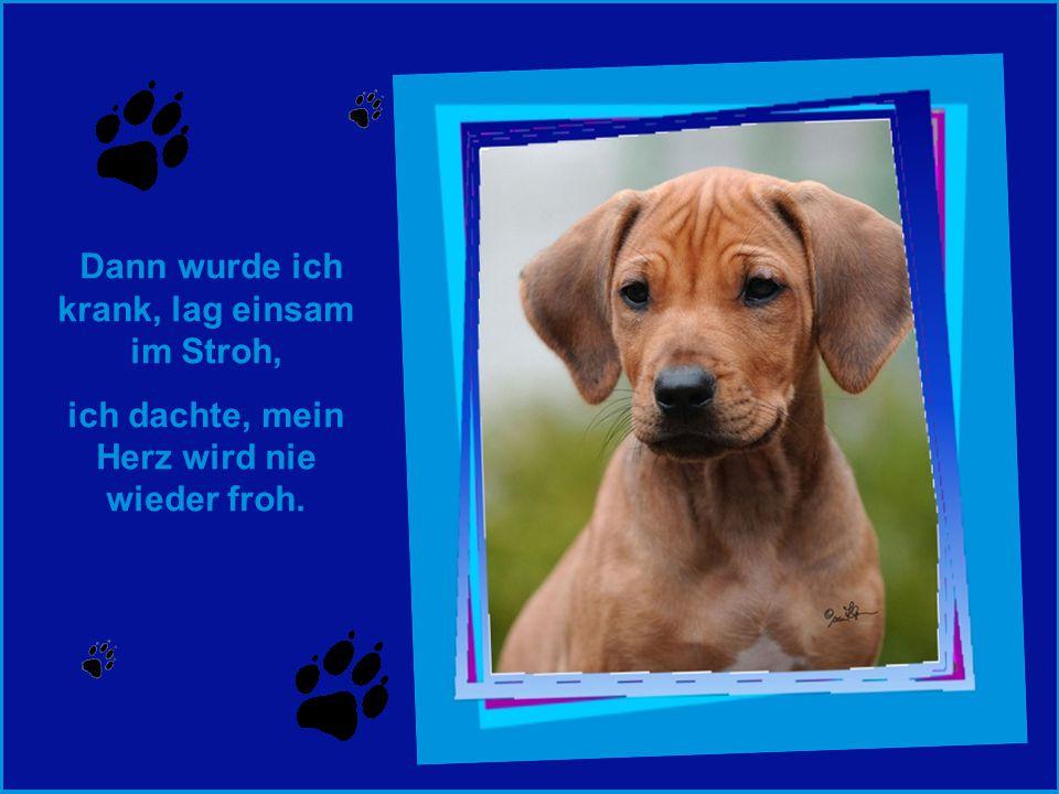 Ein neues Spielzeug hast Du gefunden ~ hattest die Nase voll von uns Hunden.