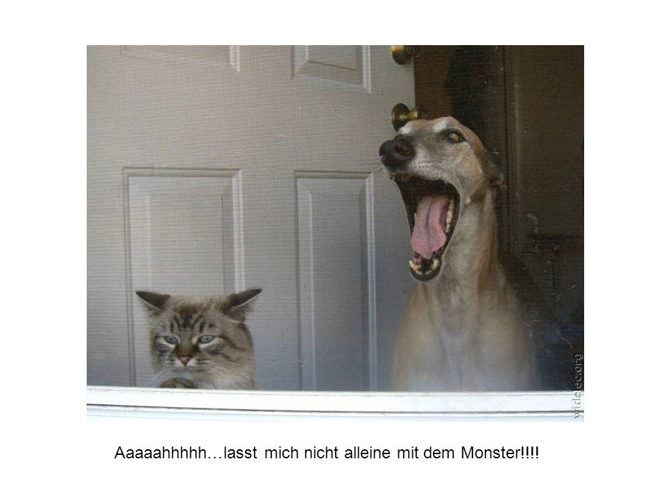 Aaaaahhhhh…lasst mich nicht alleine mit dem Monster!!!!