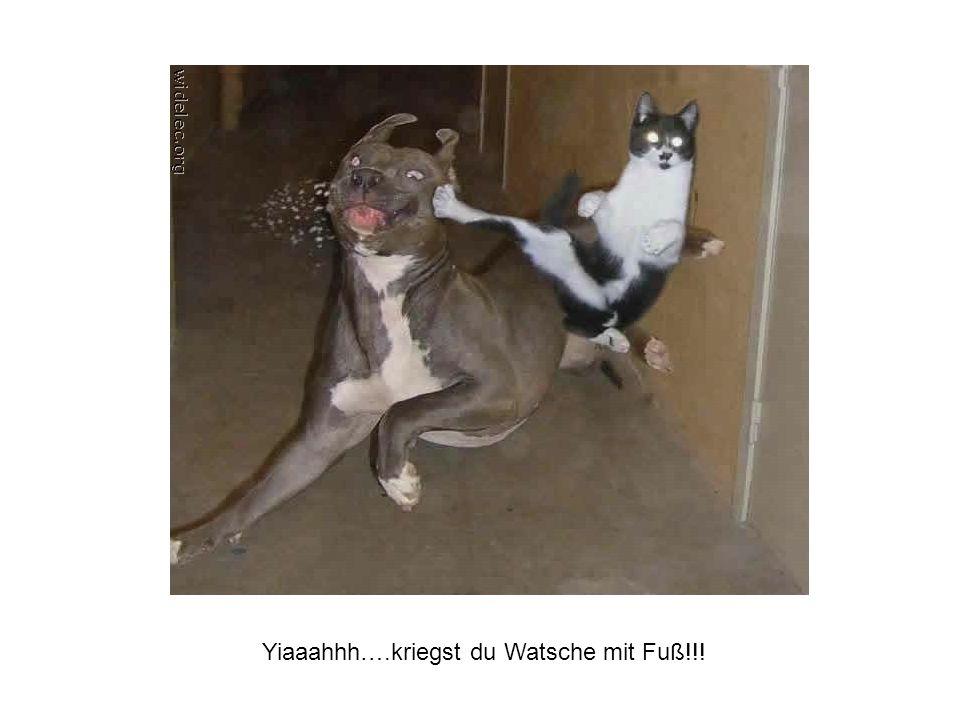 Yiaaahhh….kriegst du Watsche mit Fuß!!!