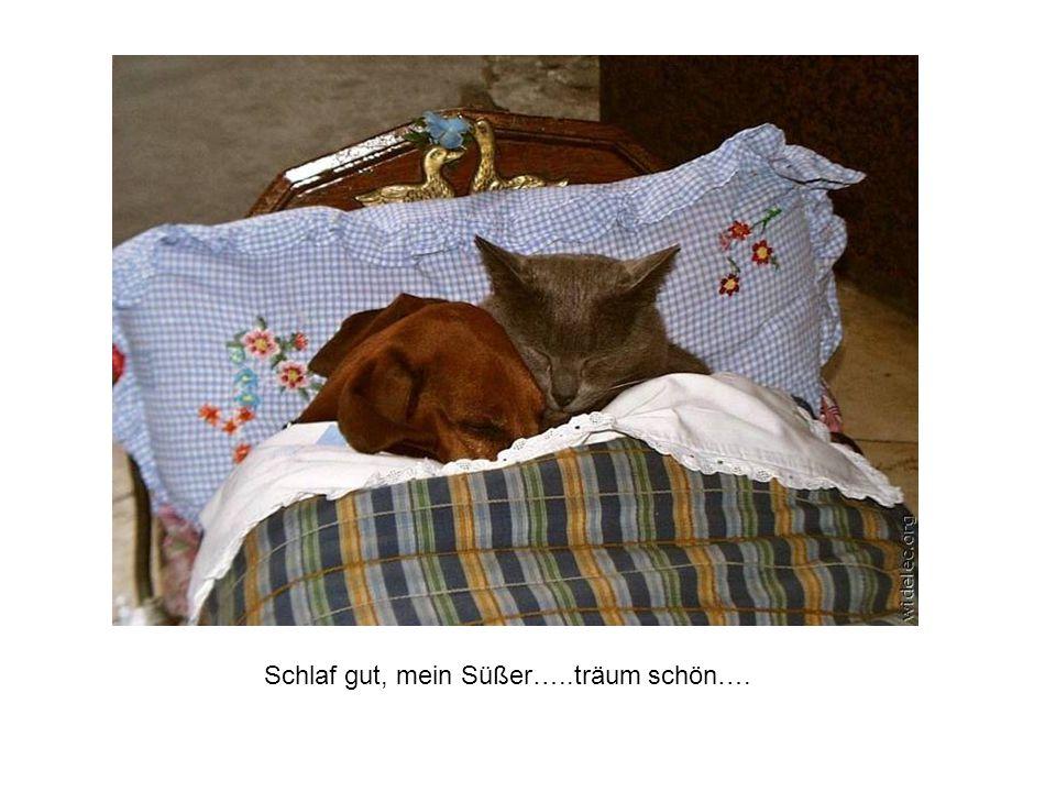 Schlaf gut, mein Süßer…..träum schön….