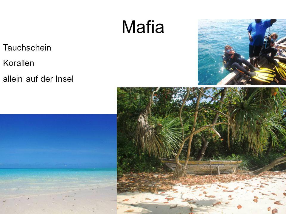Mafia Tauchschein Korallen allein auf der Insel