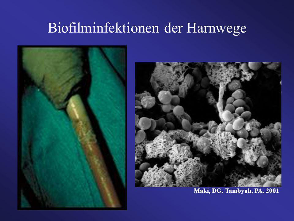 Biofilminfektionen der Harnwege Maki, DG, Tambyah, PA, 2001