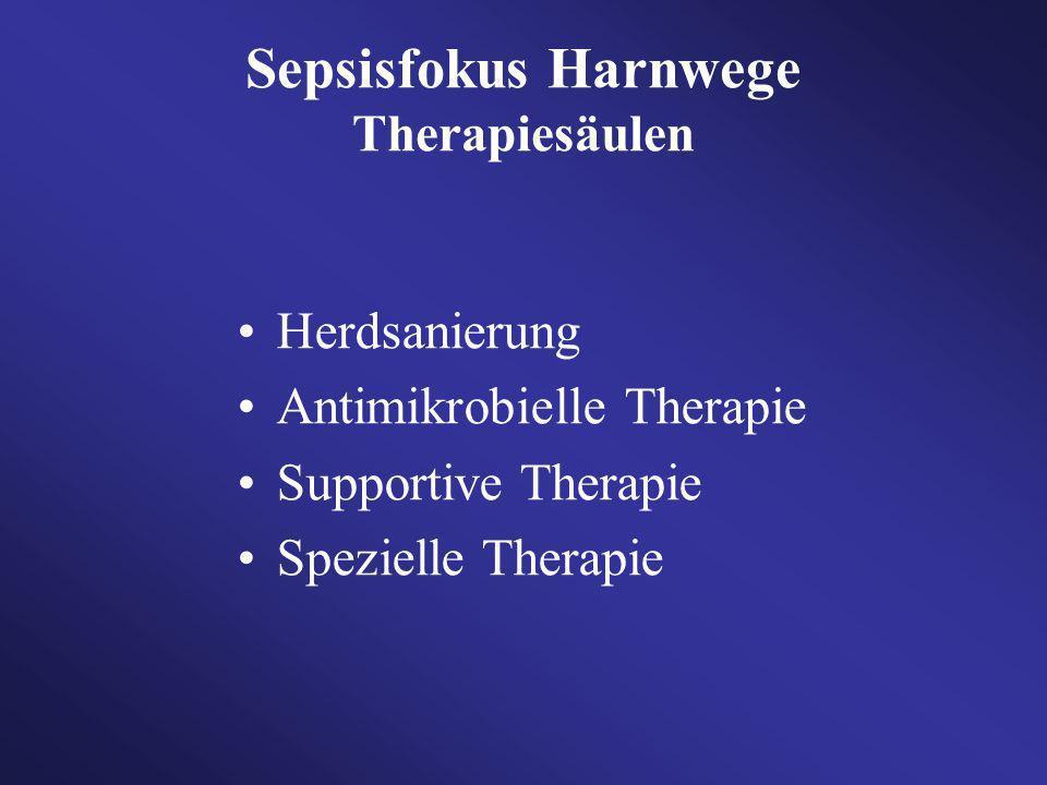 Sepsisfokus Harnwege Therapiesäulen Herdsanierung Antimikrobielle Therapie Supportive Therapie Spezielle Therapie