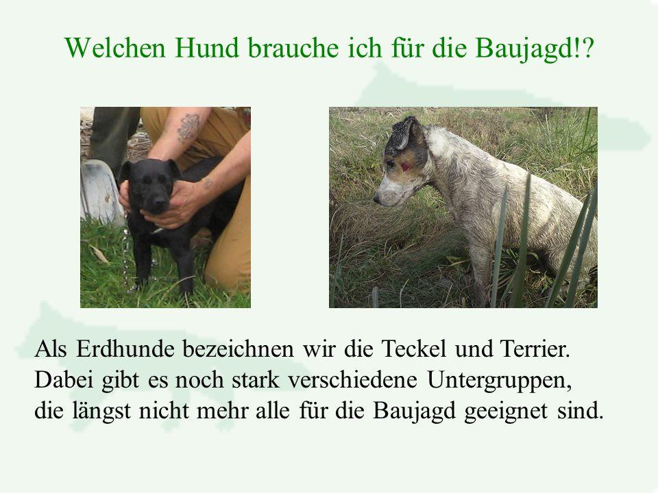 Welchen Hund brauche ich für die Baujagd!.Als Erdhunde bezeichnen wir die Teckel und Terrier.