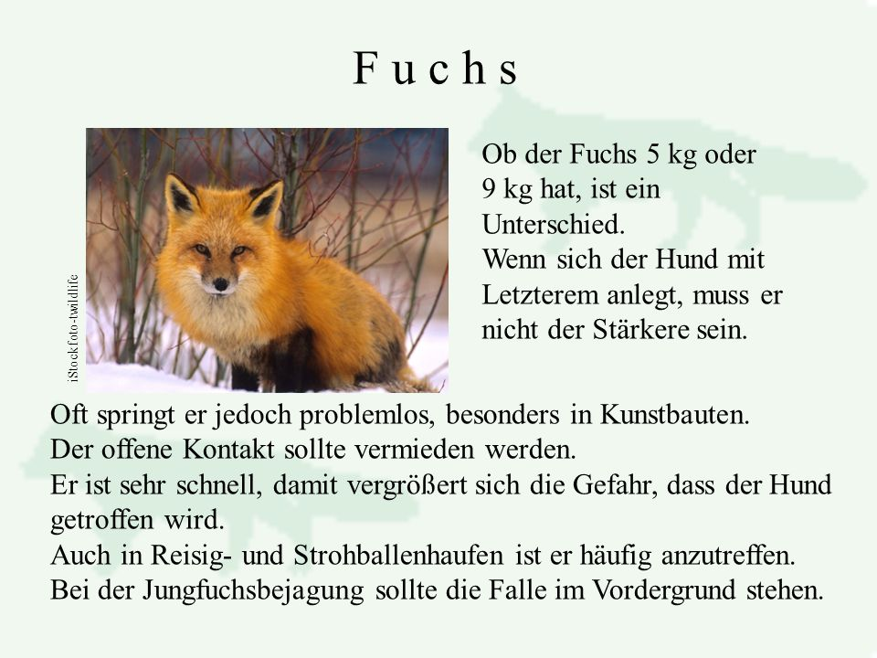 F u c h s Ob der Fuchs 5 kg oder 9 kg hat, ist ein Unterschied.