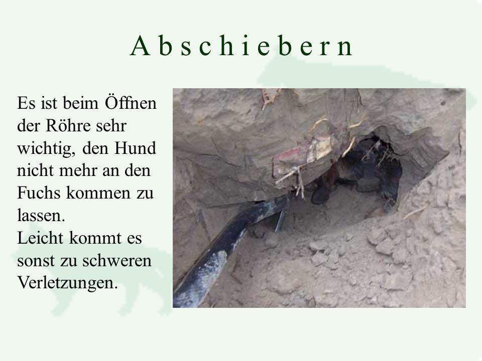 A b s c h i e b e r n Es ist beim Öffnen der Röhre sehr wichtig, den Hund nicht mehr an den Fuchs kommen zu lassen.