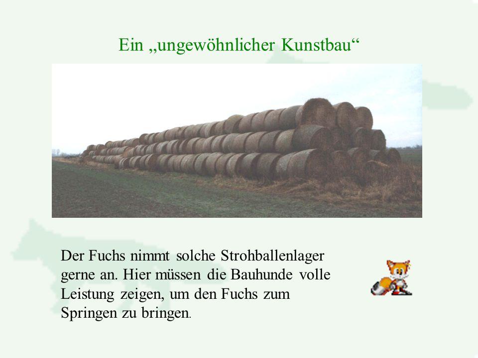 """Ein """"ungewöhnlicher Kunstbau Der Fuchs nimmt solche Strohballenlager gerne an."""