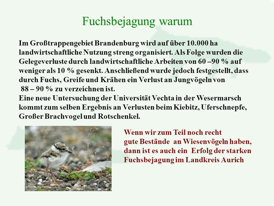 Im Großtrappengebiet Brandenburg wird auf über 10.000 ha landwirtschaftliche Nutzung streng organisiert.
