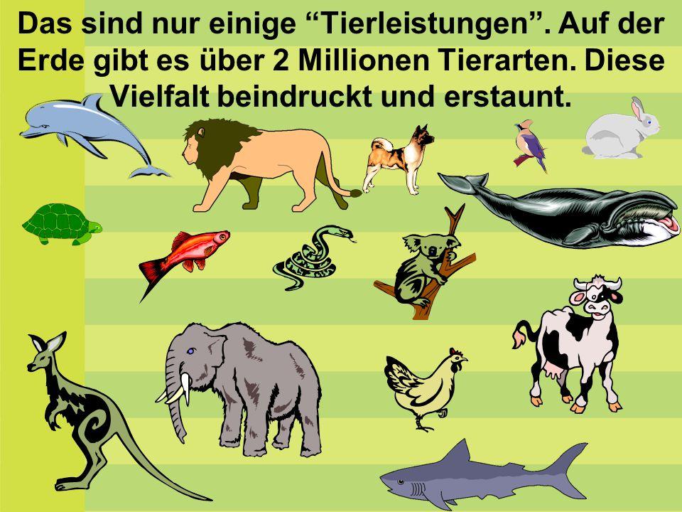 """Das sind nur einige """"Tierleistungen"""". Auf der Erde gibt es über 2 Millionen Tierarten. Diese Vielfalt beindruckt und erstaunt."""