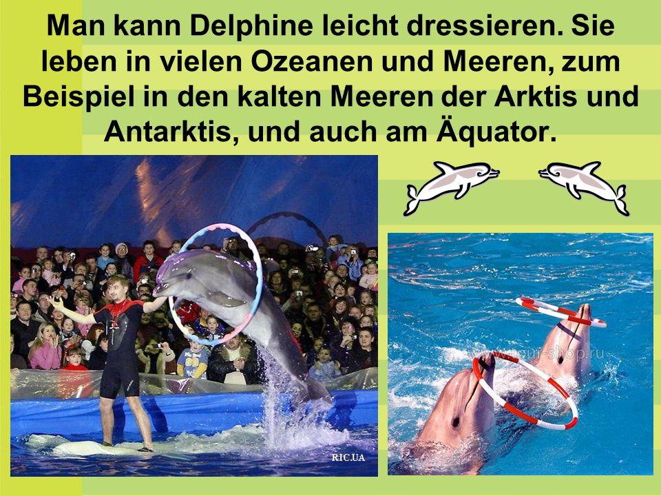 Man kann Delphine leicht dressieren. Sie leben in vielen Ozeanen und Meeren, zum Beispiel in den kalten Meeren der Arktis und Antarktis, und auch am Ä