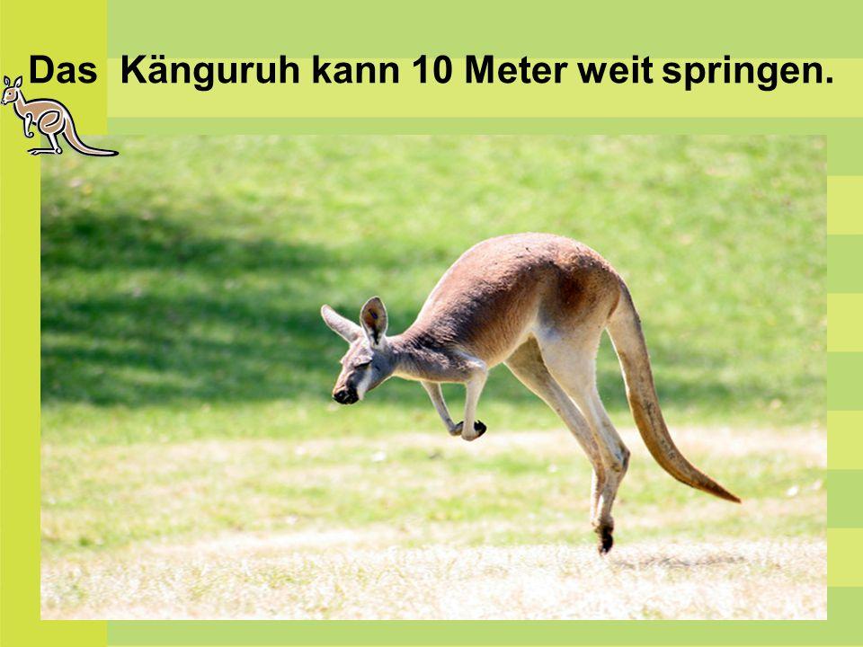 Die Känguruhs geben einander Signale mit den Beinen.