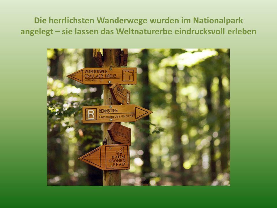 Die herrlichsten Wanderwege wurden im Nationalpark angelegt – sie lassen das Weltnaturerbe eindrucksvoll erleben