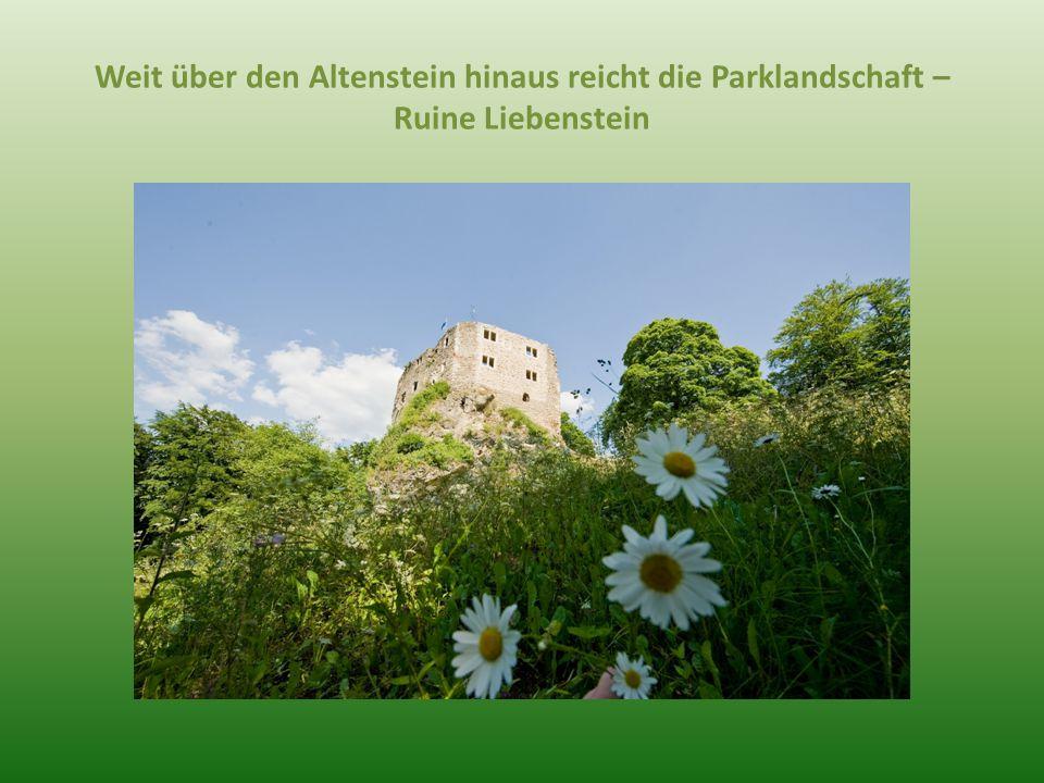 Weit über den Altenstein hinaus reicht die Parklandschaft – Ruine Liebenstein