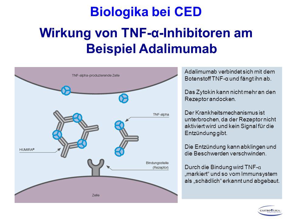 Biologika bei CED Wirkung von TNF-α-Inhibitoren am Beispiel Adalimumab Adalimumab verbindet sich mit dem Botenstoff TNF-α und fängt ihn ab.