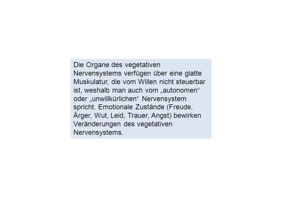 """Die Organe des vegetativen Nervensystems verfügen über eine glatte Muskulatur, die vom Willen nicht steuerbar ist, weshalb man auch vom """"autonomen"""" od"""