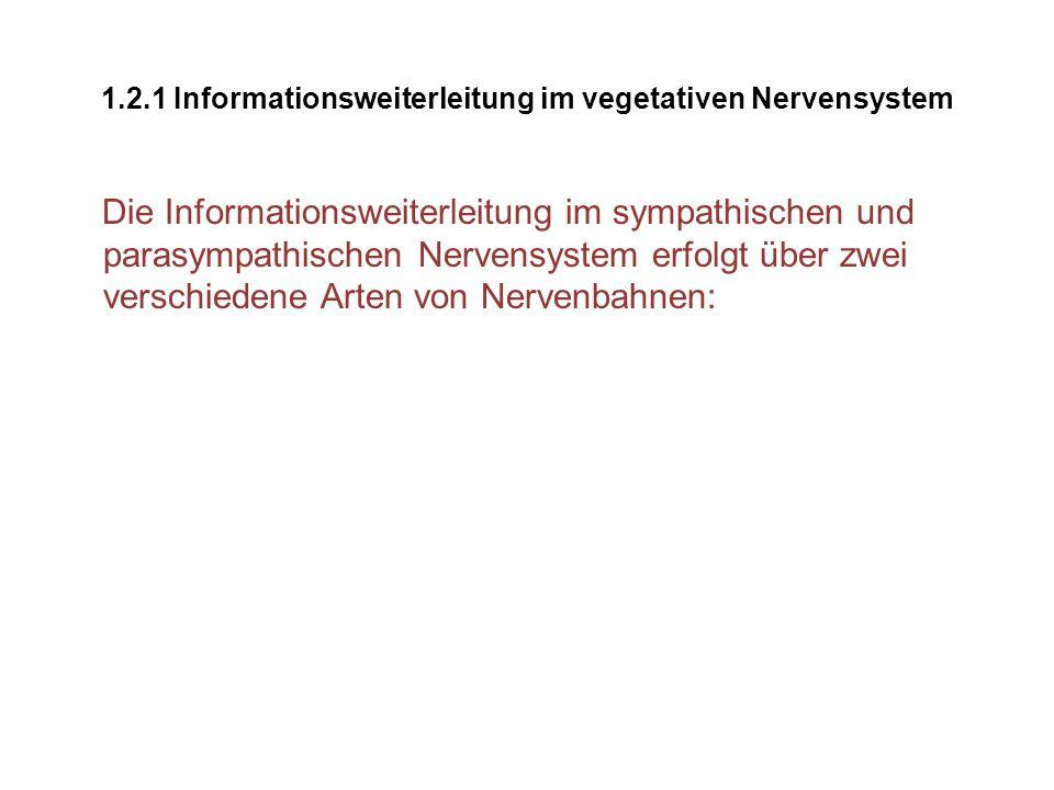 1.2.1 Informationsweiterleitung im vegetativen Nervensystem Die Informationsweiterleitung im sympathischen und parasympathischen Nervensystem erfolgt