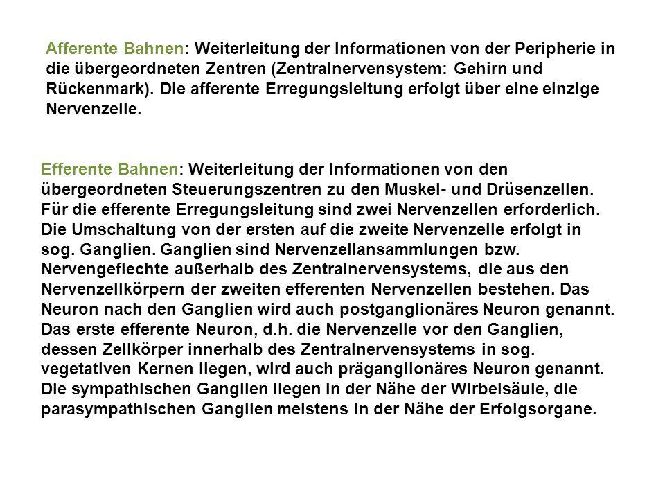Afferente Bahnen: Weiterleitung der Informationen von der Peripherie in die übergeordneten Zentren (Zentralnervensystem: Gehirn und Rückenmark). Die a