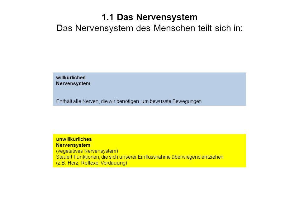 1.1 Das Nervensystem Das Nervensystem des Menschen teilt sich in: willkürliches Nervensystem Enthält alle Nerven, die wir benötigen, um bewusste Beweg