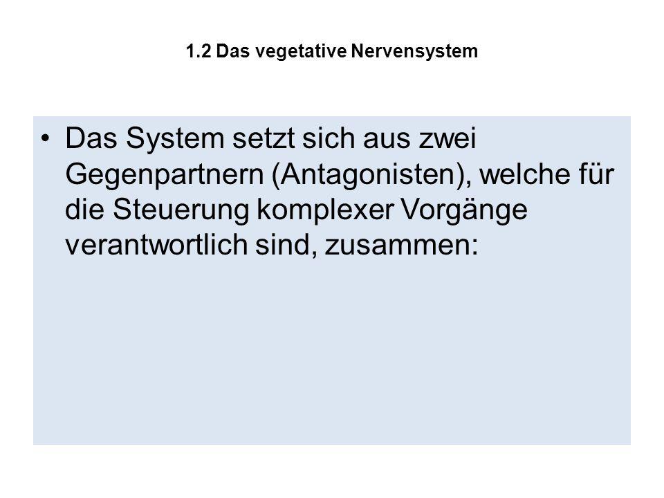1.2 Das vegetative Nervensystem Das System setzt sich aus zwei Gegenpartnern (Antagonisten), welche für die Steuerung komplexer Vorgänge verantwortlic