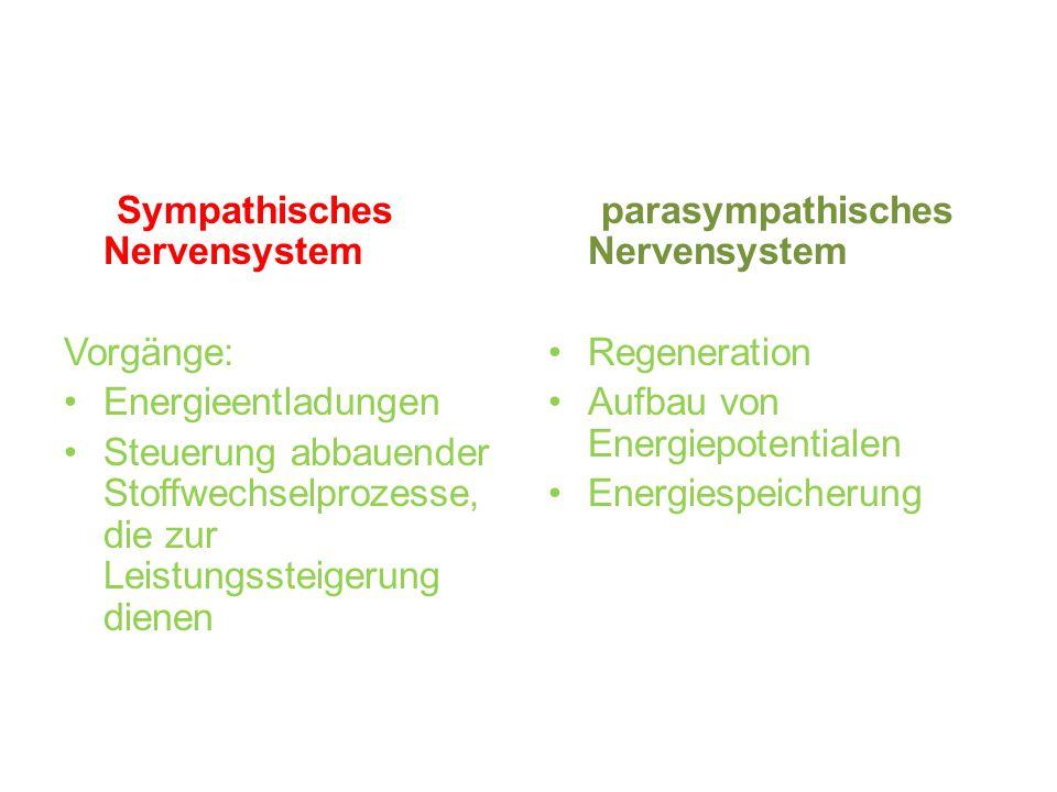 Sympathisches Nervensystem Vorgänge: Energieentladungen Steuerung abbauender Stoffwechselprozesse, die zur Leistungssteigerung dienen parasympathische