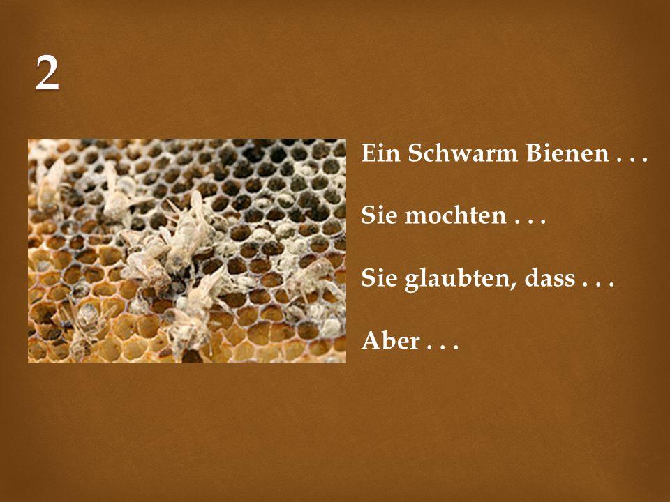 Ein Schwarm Bienen... Sie mochten... Sie glaubten, dass... Aber...