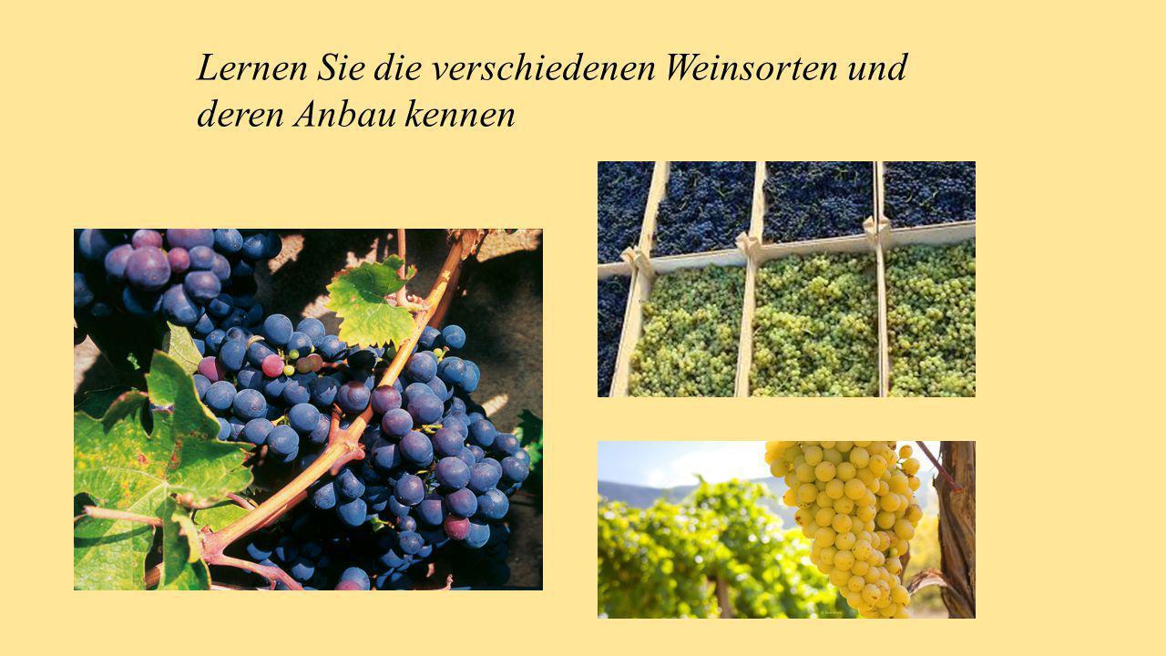 Lernen Sie die verschiedenen Weinsorten und deren Anbau kennen