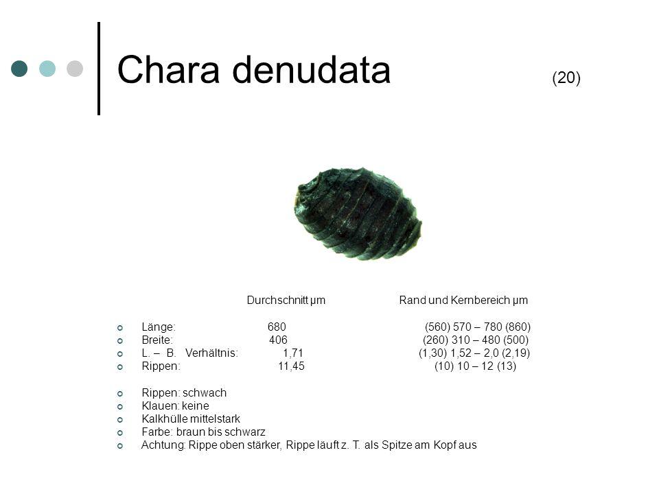 Chara denudata (20) Durchschnitt µm Rand und Kernbereich µm Länge: 680 (560) 570 – 780 (860) Breite: 406 (260) 310 – 480 (500) L. – B. Verhältnis: 1,7
