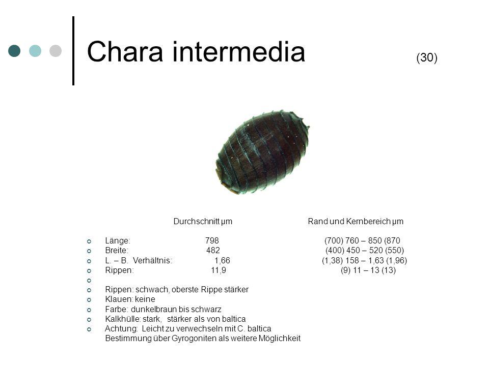 Chara intermedia (30) Durchschnitt µm Rand und Kernbereich µm Länge: 798 (700) 760 – 850 (870 Breite: 482 (400) 450 – 520 (550) L. – B. Verhältnis: 1,