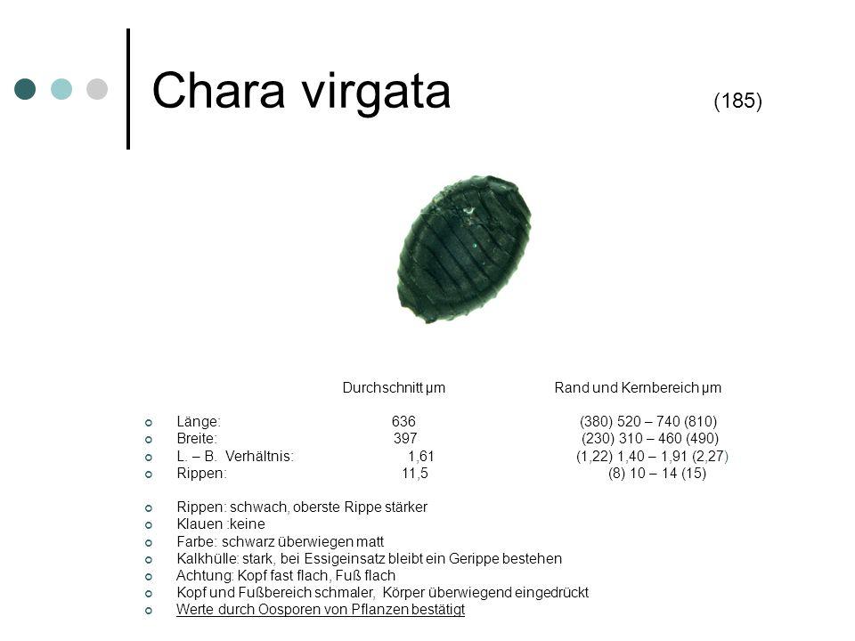 Chara virgata (185) Durchschnitt µm Rand und Kernbereich µm Länge: 636 (380) 520 – 740 (810) Breite: 397 (230) 310 – 460 (490) L. – B. Verhältnis: 1,6
