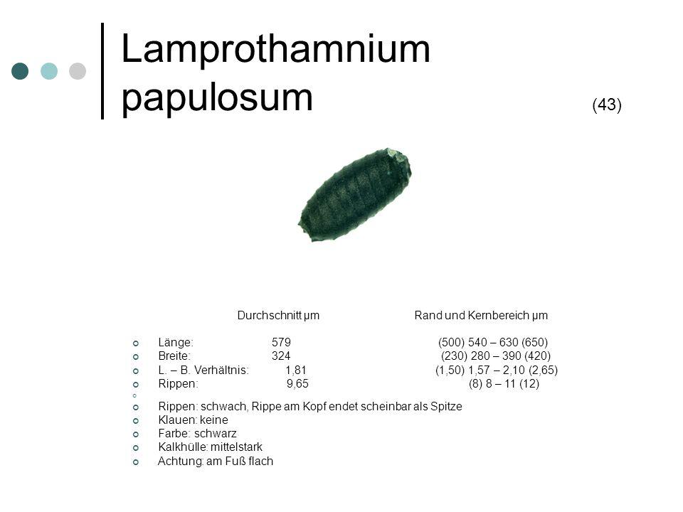 Lamprothamnium papulosum (43) Durchschnitt µm Rand und Kernbereich µm Länge: 579 (500) 540 – 630 (650) Breite: 324 (230) 280 – 390 (420) L. – B. Verhä