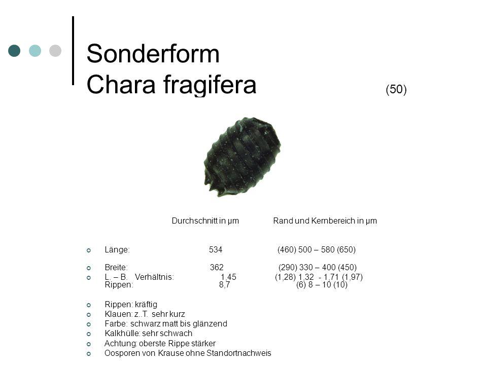 Sonderform Chara imperfekta (50) Durchschnitt µm Rand und Kernbereich µm Länge 548 (450) 500 – 600 (620) Breite 350 (270) 310 – 380 (390) L – B Verhältnis 1,57 (1,51) 1,54 – 1,61 (1,75) Rippen 9,8 (8) 9 – 11 (11) Rippen: normal, z.