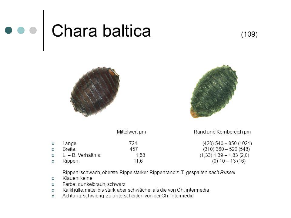 Chara baltica (109) Mittelwert µm Rand und Kernbereich µm Länge: 724 (420) 540 – 850 (1021) Breite: 457 (310) 360 – 520 (548) L. – B. Verhältnis: 1,58