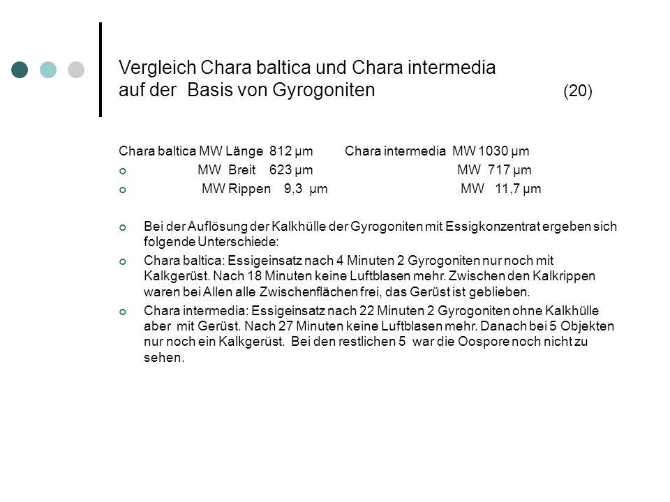 Vergleich Chara baltica und Chara intermedia auf der Basis von Gyrogoniten (20) Chara baltica MW Länge 812 µm Chara intermedia MW 1030 µm MW Breit 623