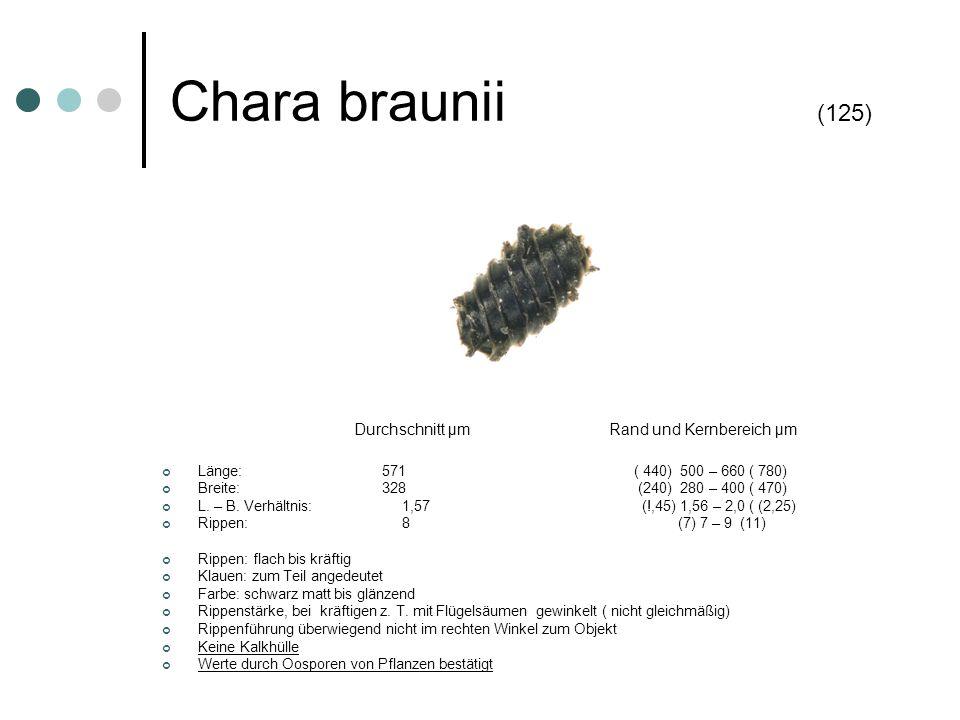 Chara braunii (125) Durchschnitt µm Rand und Kernbereich µm Länge: 571 ( 440) 500 – 660 ( 780) Breite: 328 (240) 280 – 400 ( 470) L. – B. Verhältnis: