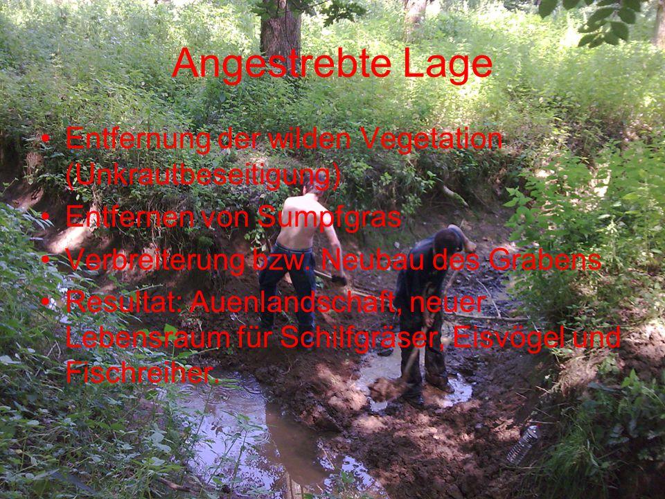 Angestrebte Lage Entfernung der wilden Vegetation (Unkrautbeseitigung) Entfernen von Sumpfgras Verbreiterung bzw. Neubau des Grabens Resultat: Auenlan