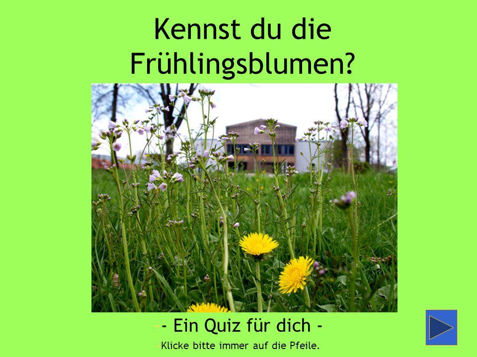 Kennst du die Frühlingsblumen? -- Ein Quiz für dich - -Klicke bitte immer auf die Pfeile.