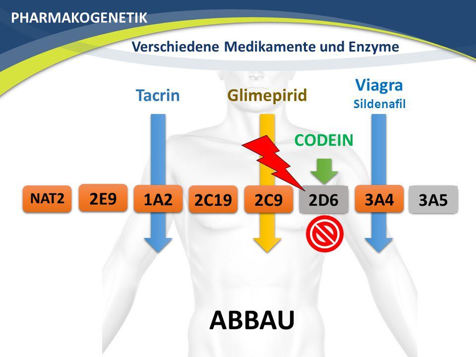 PHARMAKOGENETIK Verschiedene Medikamente und Enzyme Die verschiedenen Enzymaktivitäten