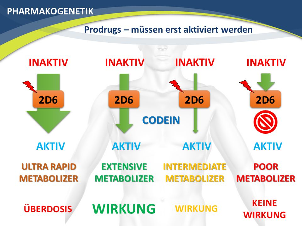 PHARMAKOGENETIK Prodrugs – müssen erst aktiviert werden AKTIV 2D6 EXTENSIVE METABOLIZER AKTIV 2D6 INTERMEDIATE METABOLIZER AKTIV 2D6 POOR METABOLIZER AKTIV 2D6 ULTRA RAPID METABOLIZER INAKTIV CODEIN WIRKUNG KEINE WIRKUNG ÜBERDOSIS