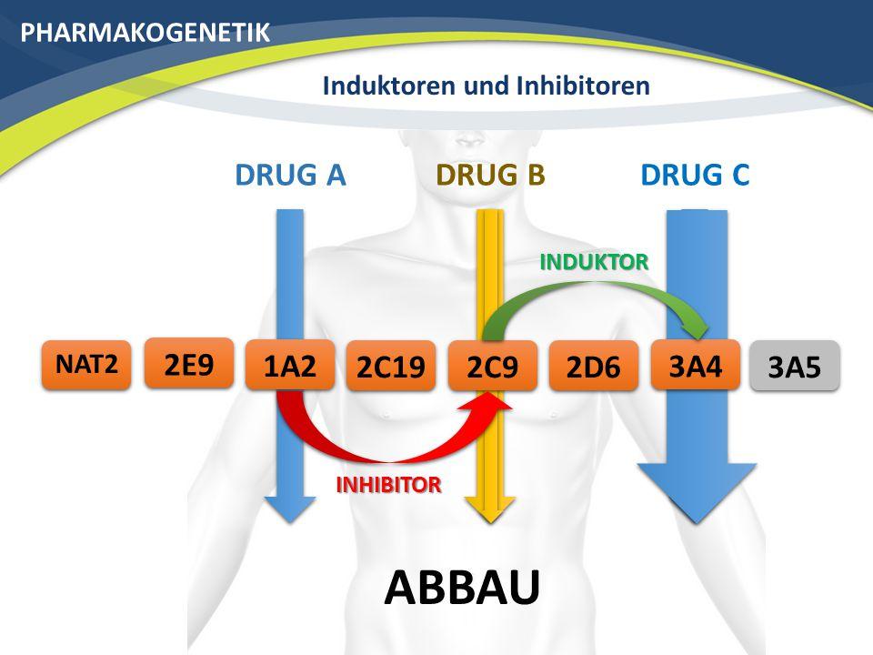 PHARMAKOGENETIK Induktoren und Inhibitoren DRUG C ABBAU 3A42C192E9 3A5 NAT2 2D6 DRUG BDRUG A 1A22C9 INHIBITOR INDUKTOR