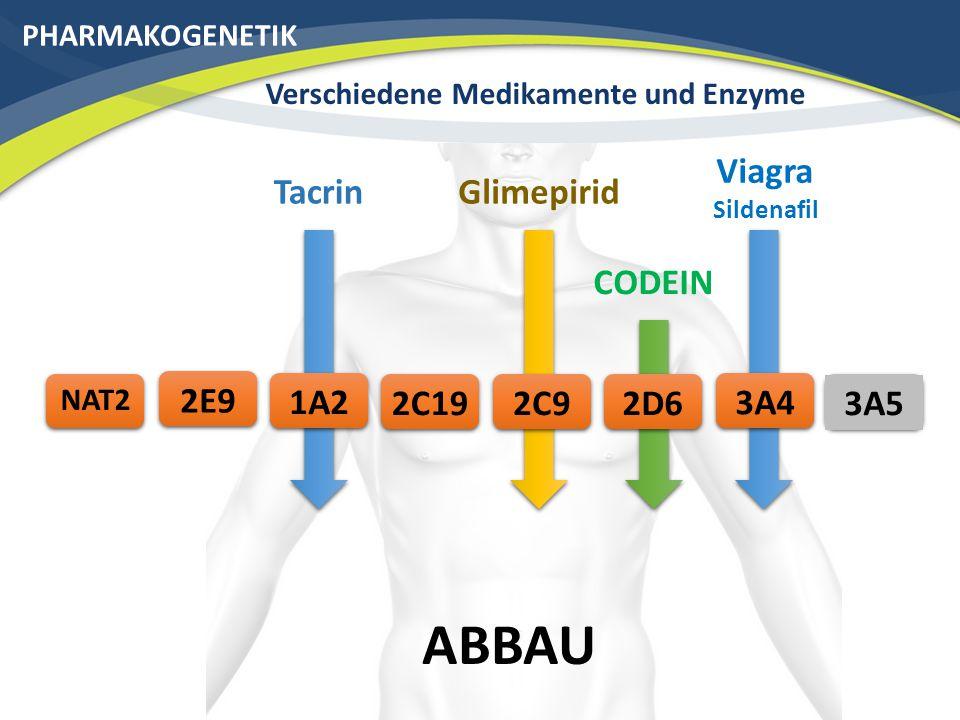 PHARMAKOGENETIK Verschiedene Medikamente und Enzyme Viagra Sildenafil ABBAU 3A42C192E9 3A5 NAT2 CODEIN 2D6 Glimepirid 2C9 Tacrin 1A2