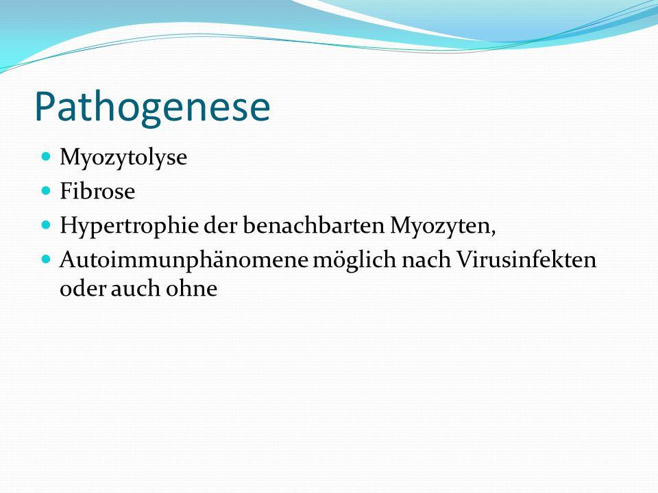 Pathogenese Myozytolyse Fibrose Hypertrophie der benachbarten Myozyten, Autoimmunphänomene möglich nach Virusinfekten oder auch ohne